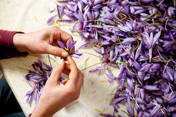 Abruzzo Saffron Susan Wright Photographer